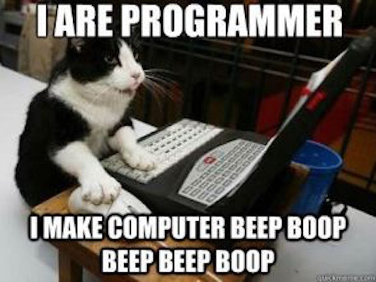 meme of cat coding on a computer