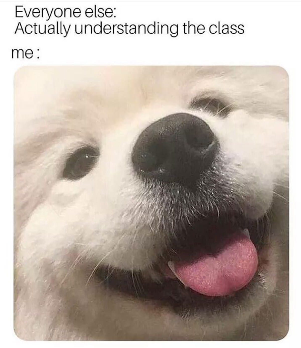 """image of dog with text """"Everyone else: actually understanding the class"""""""