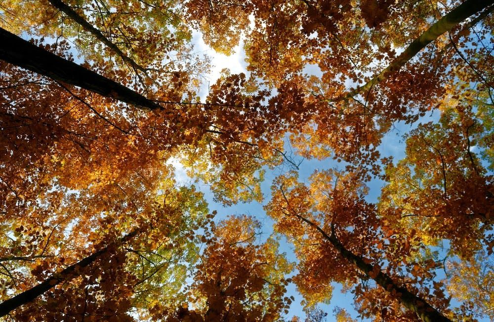 Brown Leaves Of A Tree Under Blue Sky 3142830