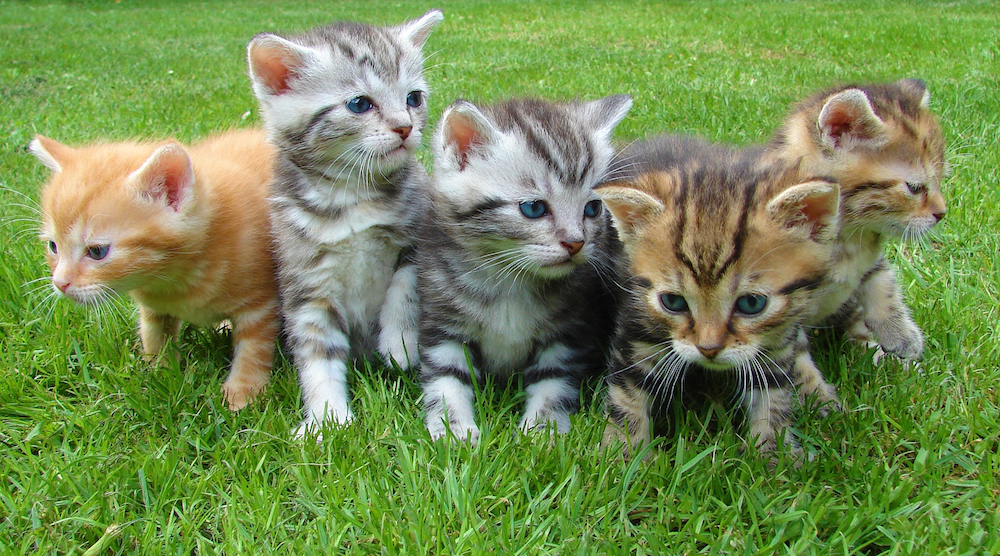 A row of five adorable kittens.