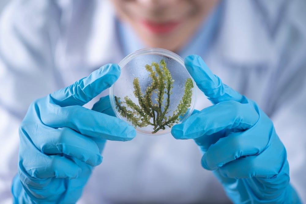 Environmental Science Careers: How You Can Help Save Earth