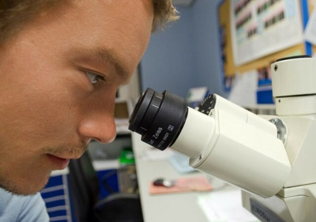 A scientist staring closely into a microscope.