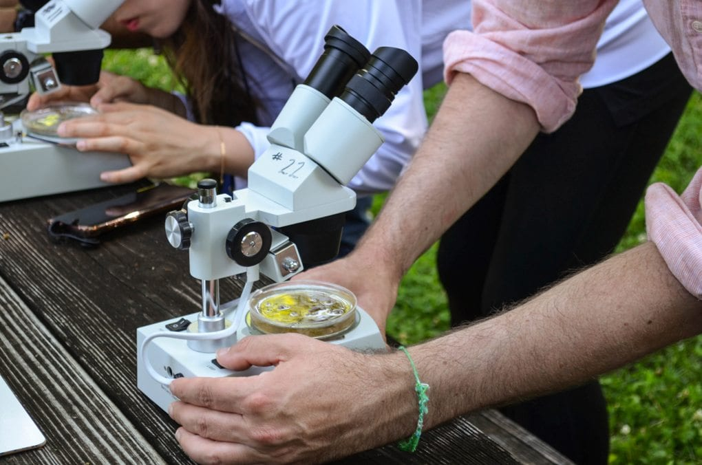 Person using microscope to examine petri dish of water