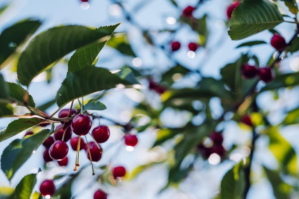 Git Cherry Pick: A Step-By-Step Guide